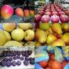 Новогодгие украшения из пенопласта - фрукты